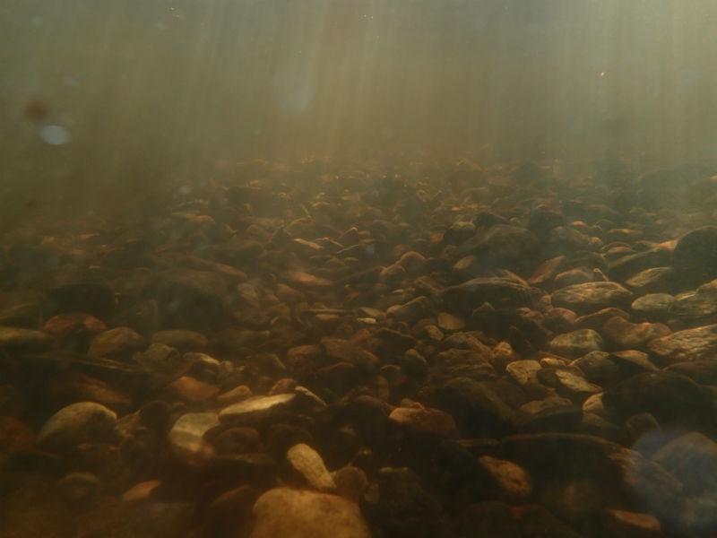 Undervattensbild på en fördigställd lekbotten. Vy nedströms.